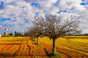 Traditionelle Windmühle auf Mallorca mit Mandelbäumen