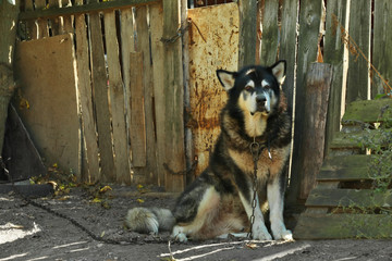 Fluffy dog on leash outdoors near wooden fence