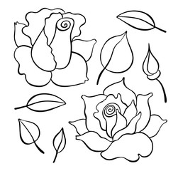 Roses set. Vector hand drawn graphic illustration. Lineal style.