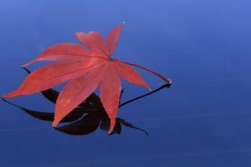 秋のイメージ モミジの葉