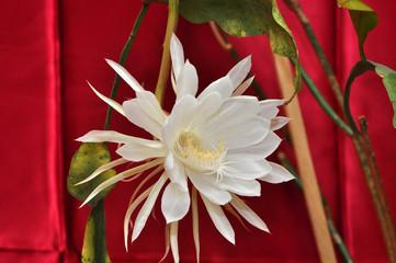 unusual beautiful white flower