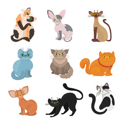 Cartoon domestic cats vector illustration