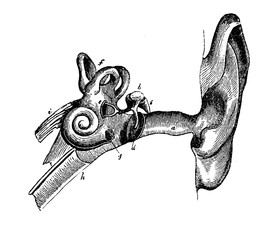 Human ear anatomy, vintage engraving