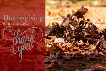 Thanksgiving Message on Autumn Background Design