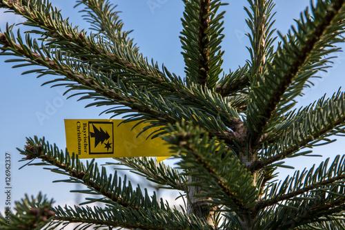 Weihnachtsbaum Ast.Weihnachtsbaum Zucht Ast Mit Etikett Stockfotos Und Lizenzfreie