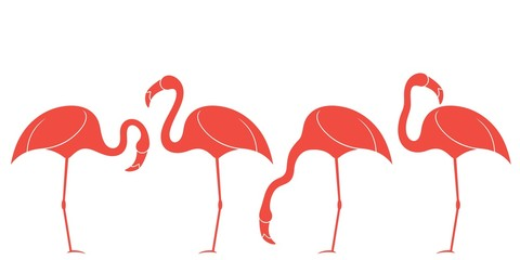 Flamingo. Exotic Birds