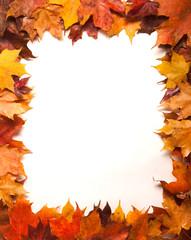 Border of maple leaves