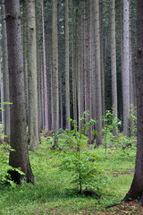 boles of trees in the forest