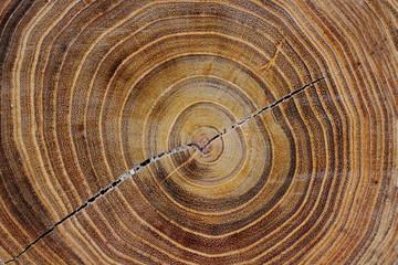 Acrylic Prints Kitchen Jahresringe von einem Baum.