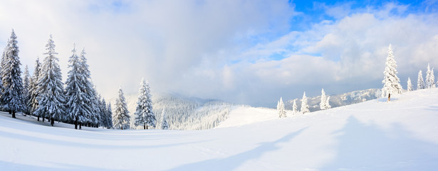Panorama with trees in snow.