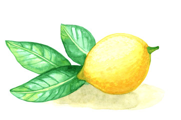 watercolor painting fruit lemon with leafs on white background