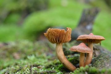 Pilze im Siegerland