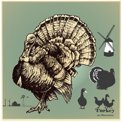 Vector illustration set .Turkey and poultry