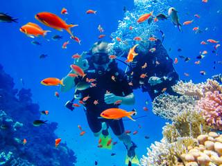 Canvas Prints Diving Активный отдых. Дайвинг у коралловых рифов