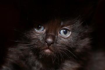 Black Kitty Portrait