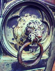 Knock Knock Lion