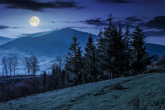 spruce forest on a mountain hillside at night