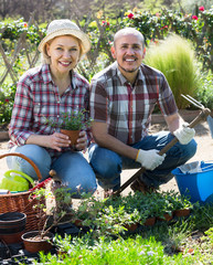 Senior smiling couple engaged in gardening