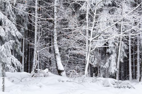 winterlandschaft im wald mit schnee stockfotos und lizenzfreie bilder auf bild. Black Bedroom Furniture Sets. Home Design Ideas