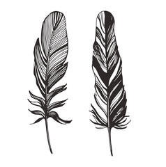 Hand drawn feathers. Vector illustration.