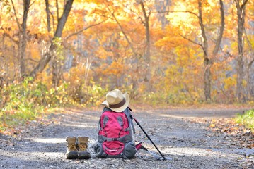 トレッキング・紅葉の森