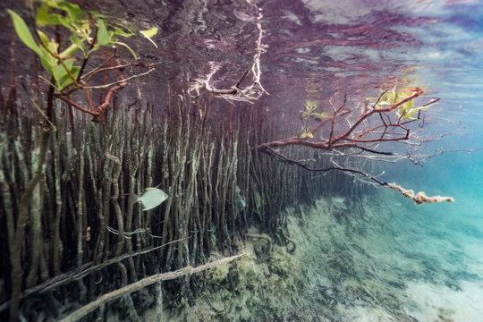 mangroves, life between earth and sea