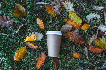 Paper coffee cup and background with autumn leaves