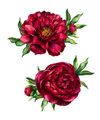 Set of watercolor red peonies bouquets, flower peony, watercolor rose with leaves isolated on white background, vector design for for invitation, wedding, save the date, card, holiday, summer design