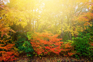 Colorful leaves at autumn park against sunset