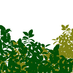 Green tree leaves detailed silhouette in nature background illus