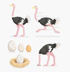 Ostrich and ostrich eggs on the nests. Vector illustration flat