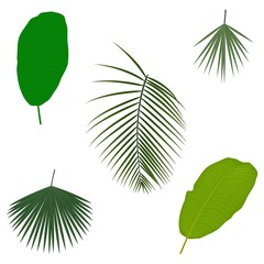 Tropical palm tree jungle leaves. Set. Vector. Leaf natural of jungle, green exotic leaves  illustration.