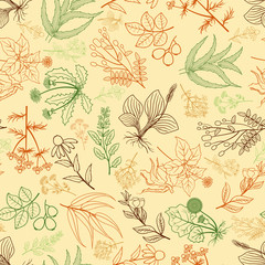 Wall Mural - Herbs background in hand drawn style