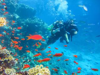 Водный спорт. Дайвинг в Красном Море