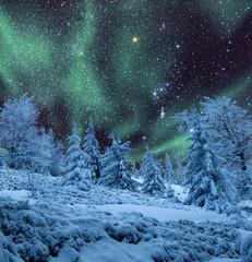 Aurora over frozen woods