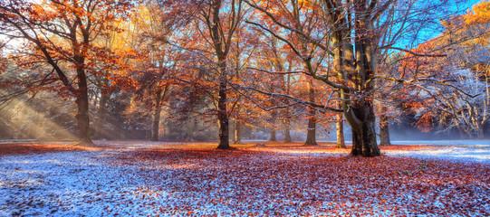 Obraz Morning sunrays in winter forest - fototapety do salonu