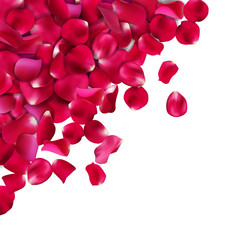 Background of red, pink rose petals. Vector illustration, Isolated on white background.