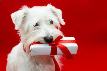 Dog with Christmas gifts