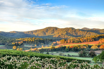 Canvas Prints Hill Autumn vineyard hills and flowers during sunset in Virginia