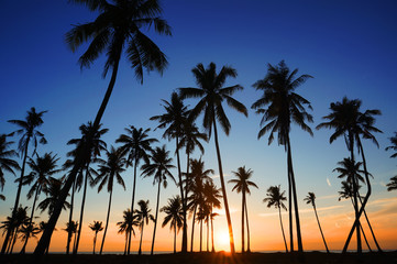Summer holiday concept - Dramatic stunning morning light sunset and Silhouetted of coconut tree in low light photography