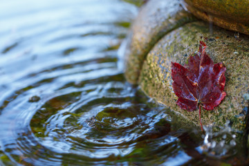 Red maple leaf on the wall of fountain with sky reflection.