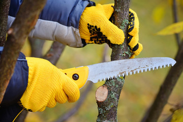 Poster Hands with gloves of gardener doing maintenance work, pruning trees in autumn