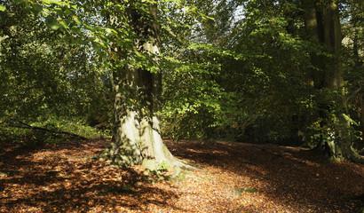 forest woodland autumn landscape