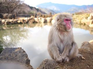 くつろぐ猿
