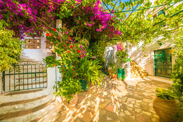 Wall Mural - Flower with stairs in  Theotokos Monastery, Paleokastritsa town, Corfu island, Greece