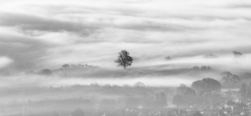 Lone tree surrounded by a layer of thick lingering fog in valley.