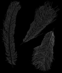 three ostrich feather sketches isolated on black