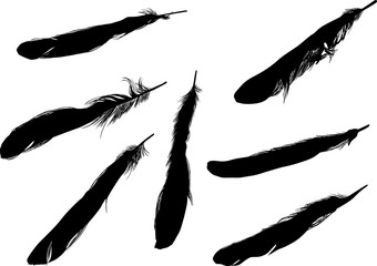 seven thin black feathers isolated on white