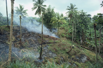 Slash and burn agriculture, St. Lucia, Windward Islands, West Indies, Caribbean, Central America