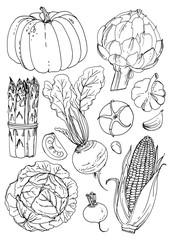 Set of vegetables. Fresh food. Pumpkin, artichokes, beets, asparagus, corn, garlic, tomato line drawn on a white background. Vector illustration. Coloring for adults